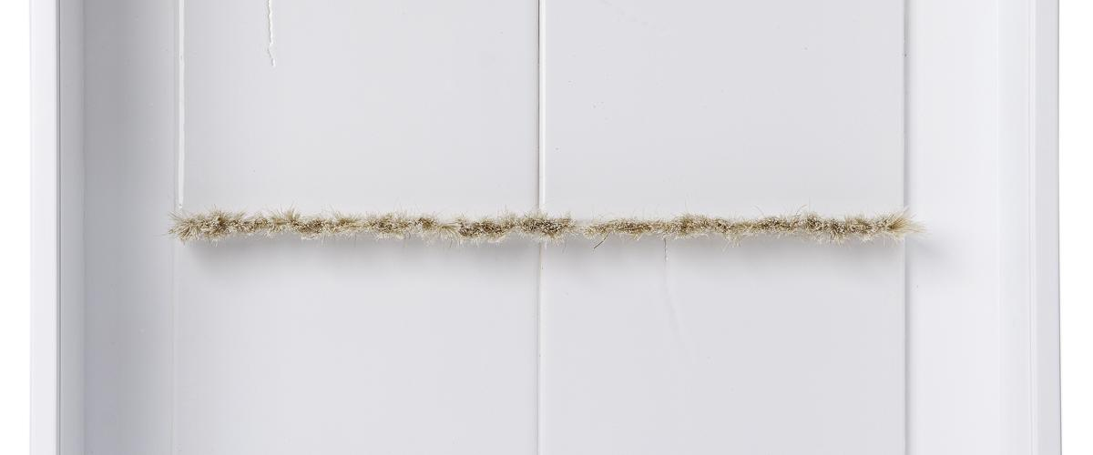 Herbarium Collection - Collection - Isida - Maria Nalbantova